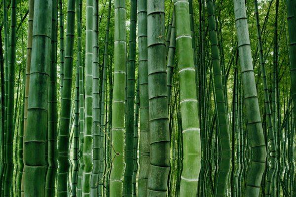 Foresta Hei Zhy Gou