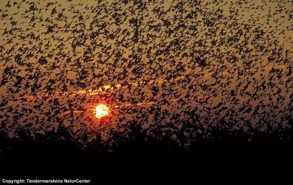Black sun Danimarca