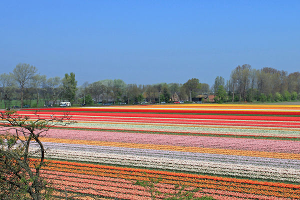 olanda strada dei fiori