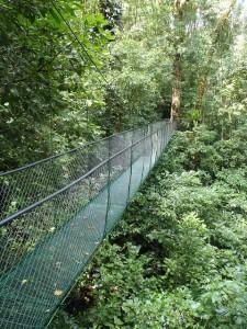 ponte foresta costa rica