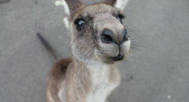 Australia: tutto quello che c'è da sapere sul Working Holiday Visa